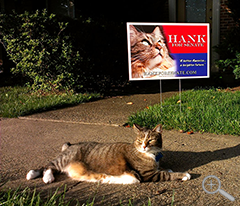 Official Campaign Yard Sign